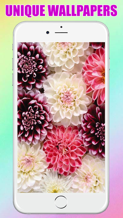 flower Wallpaper & Background for Iphone and Ipad | Enfew